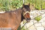 Paard in Aspous   Skyros Griekenland - Foto van De Griekse Gids