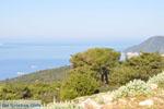 Uitzicht op baai Pefkos   Agios Panteleimon   Skyros foto 4 - Foto van De Griekse Gids