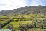 Kalamitsa  | Skyros Griekenland foto 2 - Foto van De Griekse Gids