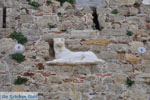 Skyros stad | Skyros Griekenland | De Griekse Gids foto 65 - Foto van De Griekse Gids
