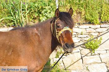 Paard in Aspous | Skyros Griekenland - Foto van De Griekse Gids