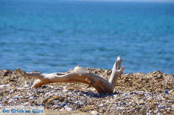 Bij Aghios Fokas | Skyros Griekenland foto 14 - Foto van De Griekse Gids