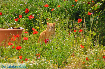 Kat bij Molos en Magazia bij Skyros stad | Skyros Griekenland foto 1 - Foto van De Griekse Gids